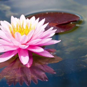 Zen - Tao de l'être